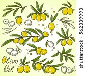 hand drawn set icons of olive... | Shutterstock .eps vector #562339993