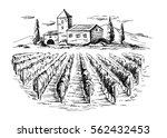 rows of vineyard grape plants... | Shutterstock .eps vector #562432453