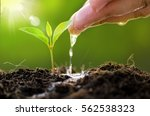 plant growing on soil with hand ... | Shutterstock . vector #562538323