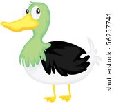 Illustration Of A Duck On Whit...