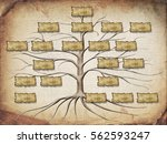 family tree illustration for... | Shutterstock . vector #562593247