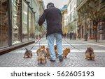 Multiple Dogs Taken On A Walk ...