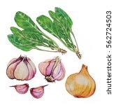 mangel garlic  onion ... | Shutterstock . vector #562724503