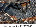 a picture of watter drops on... | Shutterstock . vector #562776043