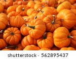 A Lot Of Mini Pumpkin At...