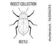 beetle insect geometric lines... | Shutterstock .eps vector #563006293