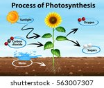 diagram showing process of... | Shutterstock .eps vector #563007307