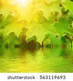 abstract sunny spring seasonal... | Shutterstock . vector #563119693
