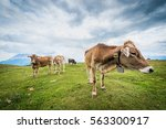 simmering mountain within the... | Shutterstock . vector #563300917