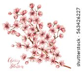 cherry blossoms watercolor... | Shutterstock . vector #563426227