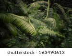 bali monkey rainforest leaves | Shutterstock . vector #563490613