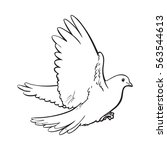 free flying white dove  sketch... | Shutterstock .eps vector #563544613