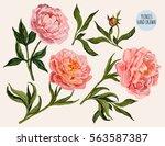 beautiful vector floral summer... | Shutterstock .eps vector #563587387