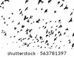 flock of birds isolated on... | Shutterstock . vector #563781397