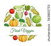 veggies poster. vector sketch... | Shutterstock .eps vector #563803753