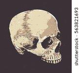 anatomic grunge skull vector... | Shutterstock .eps vector #563821693