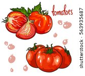 vector set of tomatoes... | Shutterstock .eps vector #563935687