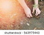 Image Of Hands Of Child Growin...