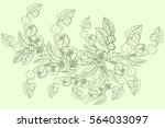 the branch of blossoming...   Shutterstock .eps vector #564033097
