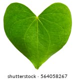 Green Leaf Heart Shaped....