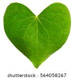 Green Leaf Heart Shaped....