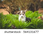 Stock photo puppy in the grass 564131677