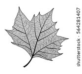 leaf maple  isolated. vector... | Shutterstock .eps vector #564281407
