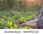 soil cultivated dirt  earth ... | Shutterstock . vector #564393133