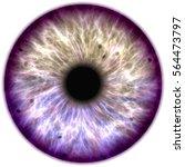 Illustration Of A Purple Iris....