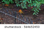 small bird in the park | Shutterstock . vector #564652453