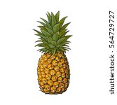 whole  unpeeled  uncut... | Shutterstock .eps vector #564729727