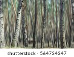 blurred photo of the pine forest   Shutterstock . vector #564734347