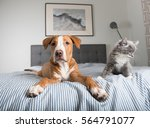 Stock photo young fawn mixed breed puppy laying on striped bed 564791077