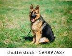 beautiful young brown german... | Shutterstock . vector #564897637