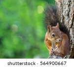 Stock photo cute squirrel 564900667