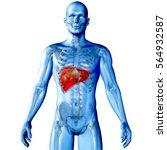 3d render of a medical image of ... | Shutterstock . vector #564932587