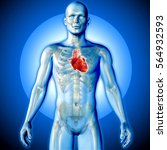 3d render of a medical image of ... | Shutterstock . vector #564932593