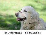 Dog With Biscuit On His Muzzle