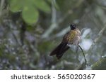 trochilidae | Shutterstock . vector #565020367
