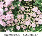 background of pink... | Shutterstock . vector #565028857