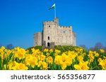 Norman Keep Castle  Daffodils ...