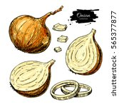 onion hand drawn set. full ... | Shutterstock . vector #565377877