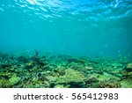 underwater world landscape ... | Shutterstock . vector #565412983
