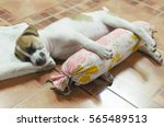 Dog Sleeping Time Of Happiness