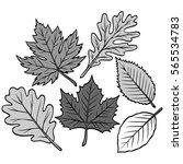 spring leaf collection... | Shutterstock .eps vector #565534783