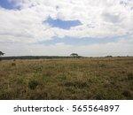 african savannah landscape.... | Shutterstock . vector #565564897
