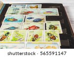 stamp collecting. philatelic.... | Shutterstock . vector #565591147