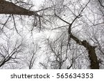 winter tree branches against... | Shutterstock . vector #565634353