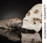 Small photo of Lizard, Agama, dragon and skull