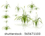 vector isolated reed. water the ... | Shutterstock .eps vector #565671103